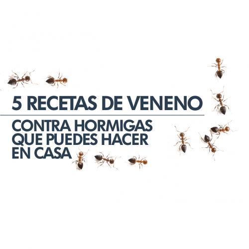 5 RECETAS DE VENENO CONTRA HORMIGAS